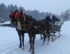 HUNTING WITH SLEIGH AND HORSE RUN
